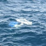 プラスチックスープの海!