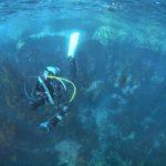 日本の海から海藻が消える!?