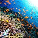 生物多様性に富む海!