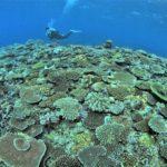 沖縄 サンゴ観察ツアー